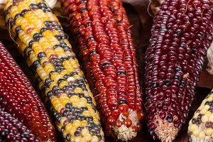 Decorative indian corn