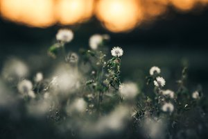 flower in spring
