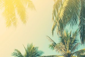 background with palm trees
