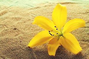 Closeup Beautiful Flower. Background