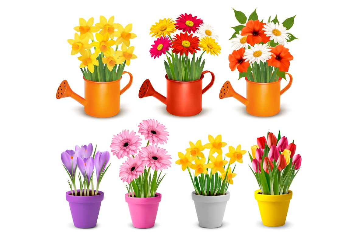 Spring And Summer Colorful Flowers Illustrations Creative Market