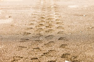 Wheel Mark in the Beach Sand
