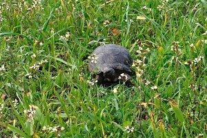 Turtle Spring Nature