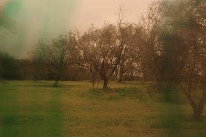 Smudged Landscape