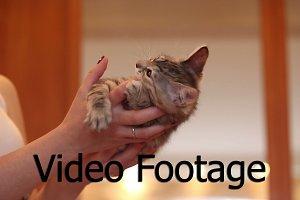 Cute little kitten biting finger