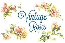 7 Vintage Roses