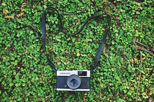 Analog film camera on green plant