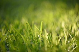 Green Grass of Summer
