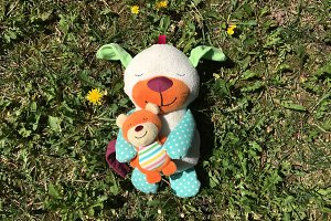 Toy sleeps on the grass photo