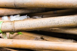 Several Reeds Canes