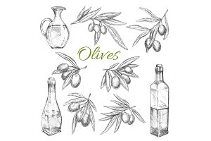 Olives vector sketch icons of olive oil product