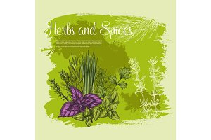 Vecor sketch poster of spices and herbs
