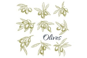 Vector sketch icons of fresh green olives branches