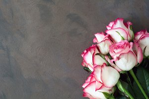Pink roses background with copyspace