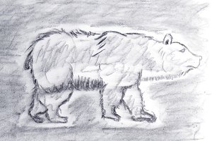 Bear Sketch drawn with charcoal