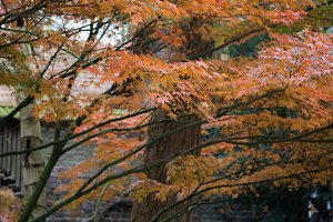 Black Veins, Orange Leaves
