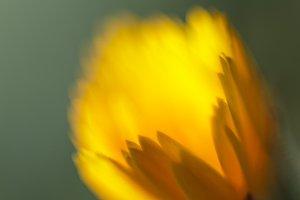 Unfocused, yellow litte flower