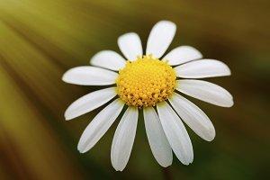 Macro of a beautiful flower