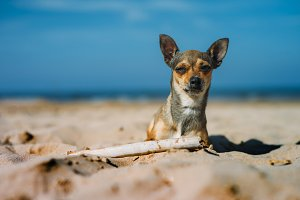 Dog mascot with a stick on the beach posing