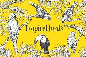 Tropical Birds Sketch