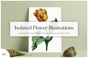 5x Isolated Flower Illustration (02)
