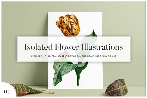 5x Isolated Flower Illustration