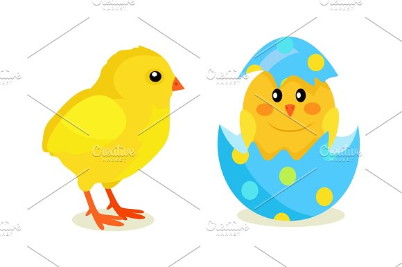 Chicken And Newborn Chick Hatch From Shell Vector