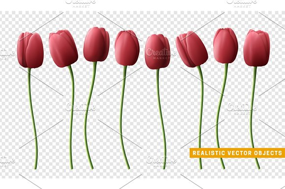 Flower Tulip Realistic Isolated On Transparent Background