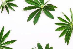 pattern of twigs, green leaves