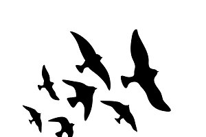 Vector flock of flying birds