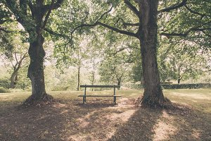Wooden bench between two trees