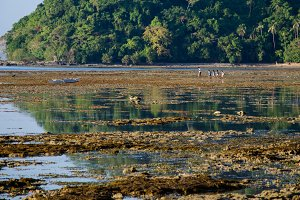 kinds walking on the low tide el nido palawan