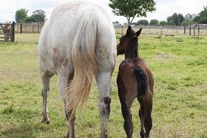 Mom & Baby Horses