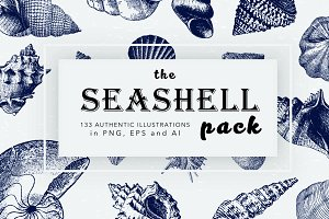 Seashell Illustration Mega Bundle