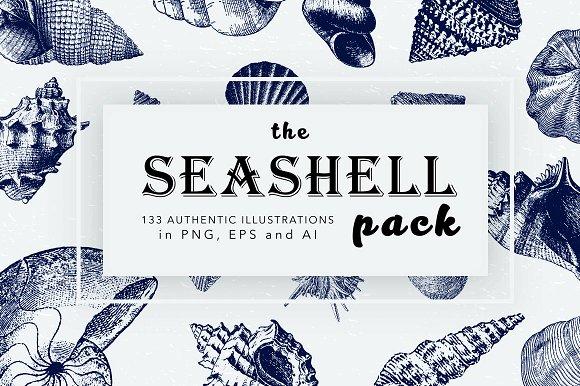 Seashell Illustration Mega Bundle