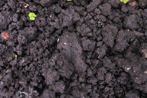 Land Mud Detail