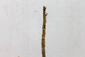 Twig in a White Background