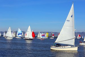 Sailboat Race in the Bay