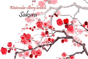 Sakura.Watercolor cherry branch