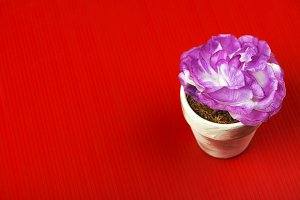 Flower decoration on red background.