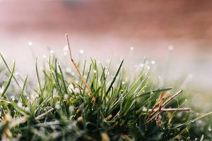Dew on the spring grass