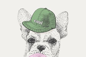 French bulldog in rapper cap