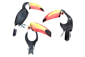 Watercolor toucan set