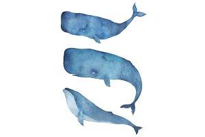 Watercolor Whale Set