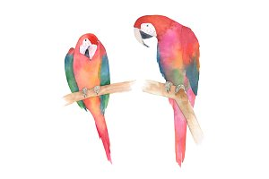 Watercolor Colorful Parrot Set