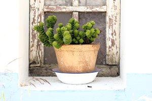 Succulent on vase