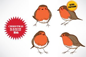 Christmas Robin Birds