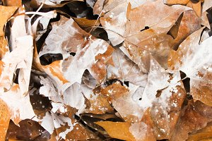 Leaves Background Paint in White