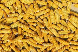 Corn on the cob corn background.