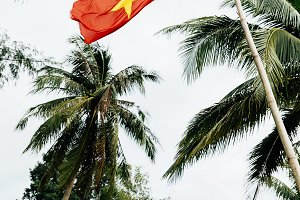 The flag of Vietnam in the jungle.